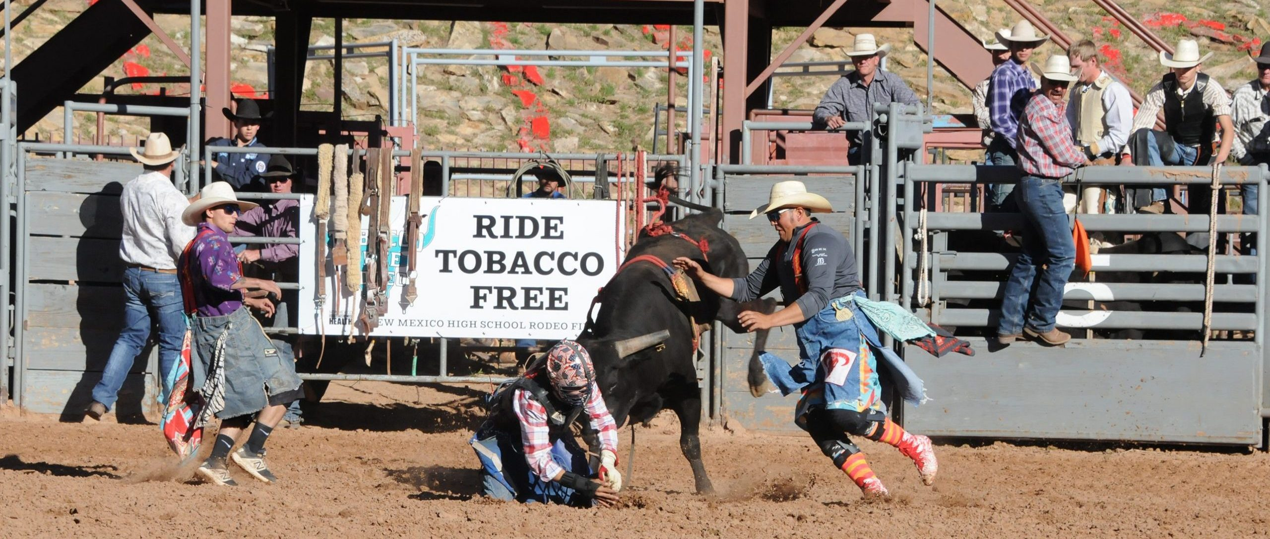 rodeo participants with bull